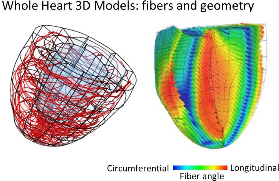 Heart Models 1