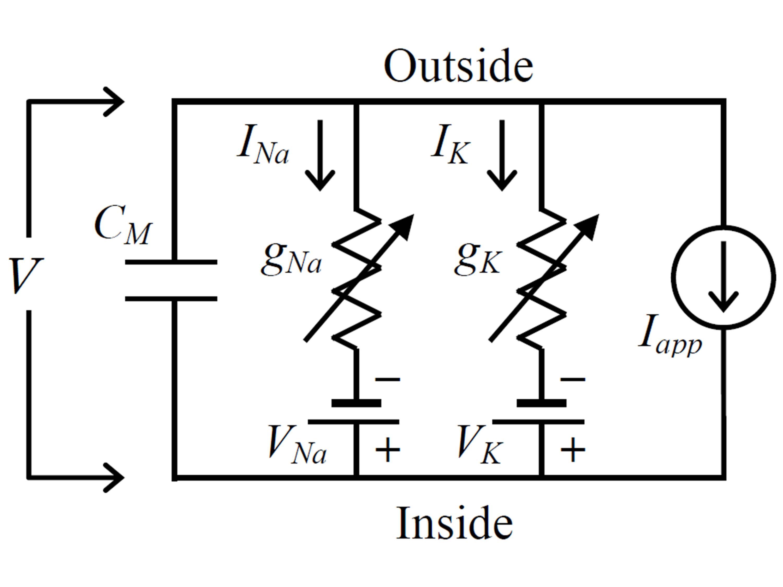HH Circuit